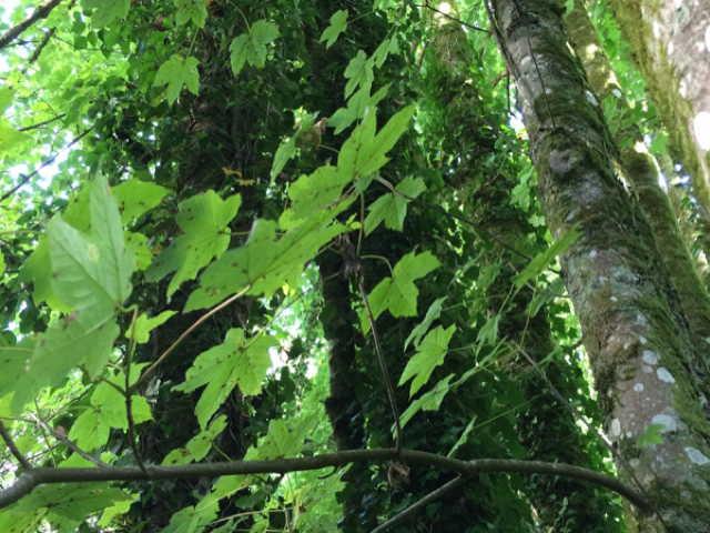 Protégé: Forêt 4 : Bernard, Sylviane