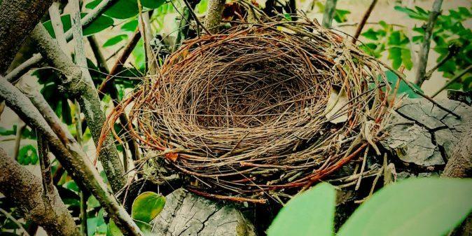 Protégé: 1. Construire le nid : Annick – Colette – Sandrine